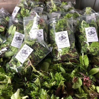 Abundant Backyard Salad Mix