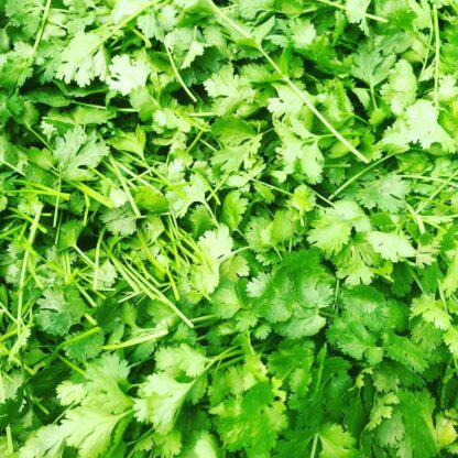 Organically Grown Herbs Abundant Backyard - Coriander