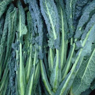 Organic Kale Cavolo Nero