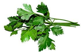 Parsley flat leaf Italian