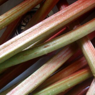 Rhubarb - organically grown by Abundant Backyard