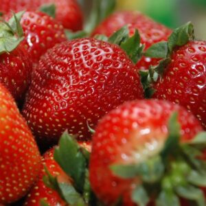 Organic Strawberries from Abundant Backyard