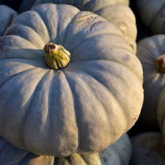 crown-pumpkin
