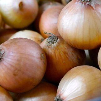 Onions - organic produce Abundant Backyard
